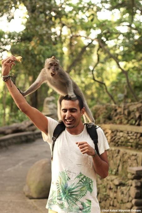 Monkey UBUD 3